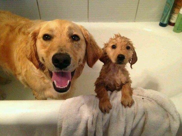 Dog with puppy in bath