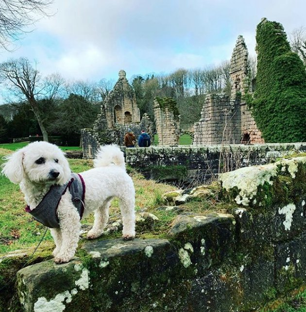 dog standing by ruins