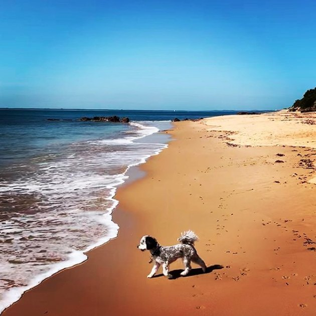 dog frolicking on empty beach
