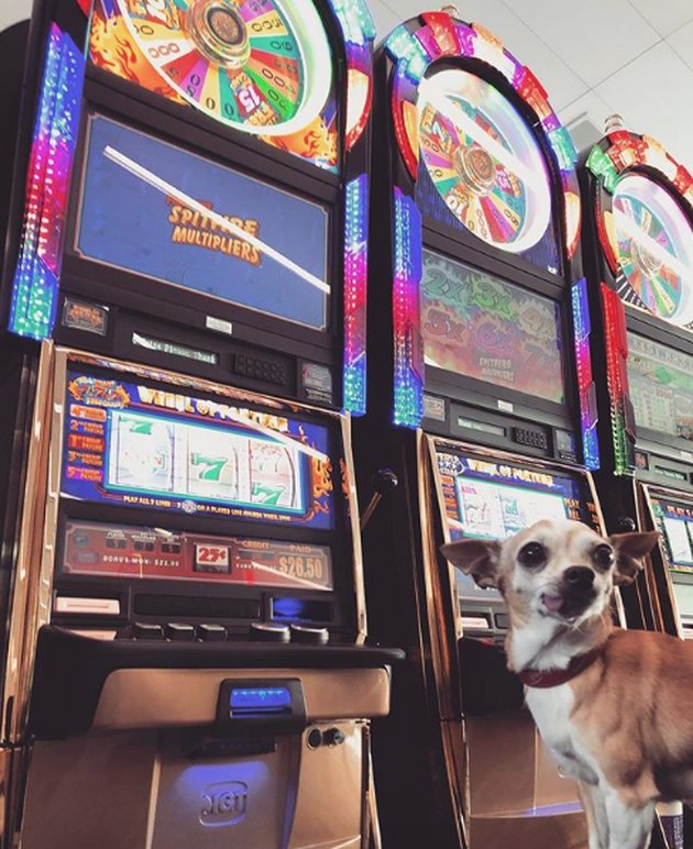dog by slot machines in Vegas