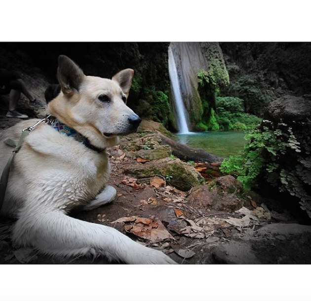 dog sitting by waterfall