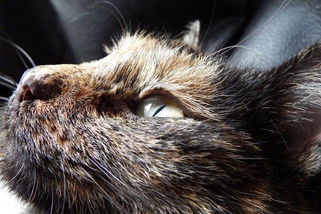 Tortoiseshell cat looking up