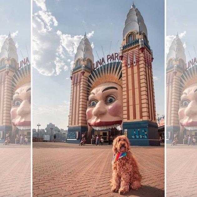 dog posing by a landmark in Australia