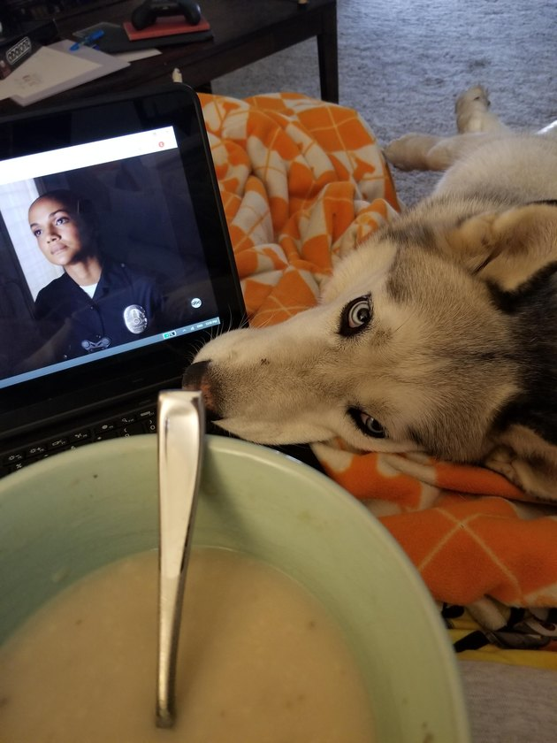 Dog looking at soup
