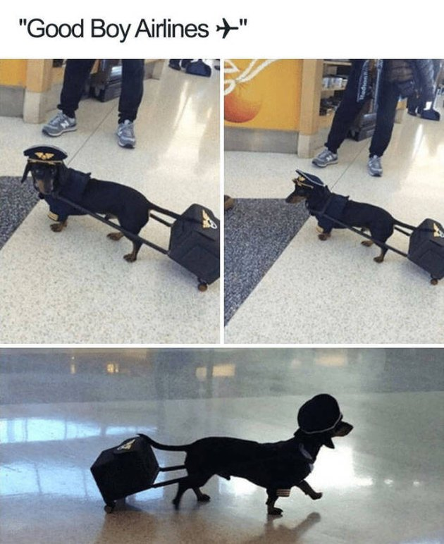Dog in a pilot outfit with suitcase