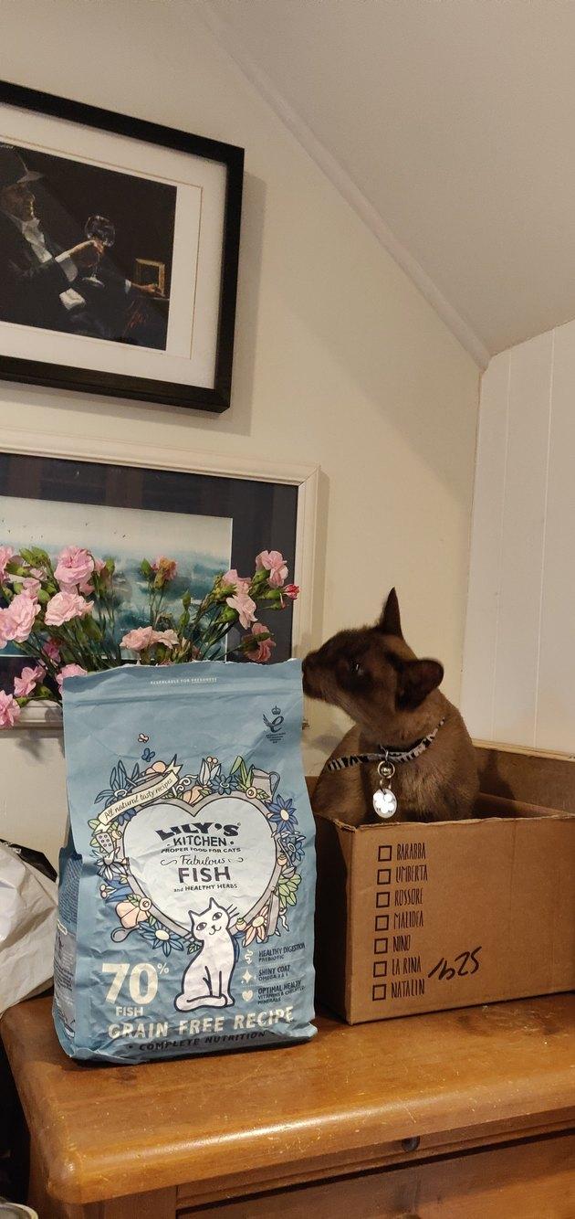 cat sniffs bag of food