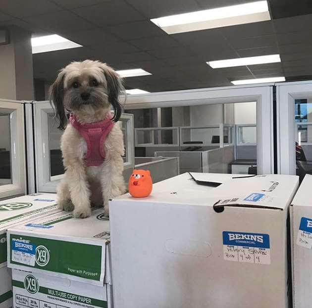 a dog on moving boxes with an orange bear toy
