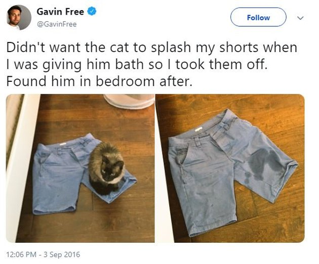 Wet cat sitting on jeans shorts.