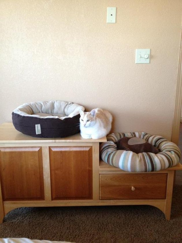 Cat sitting between two cat beds.