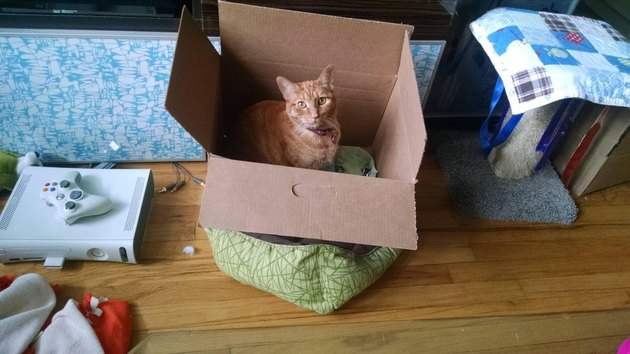 Cat sitting in a box on top of a cat bed.