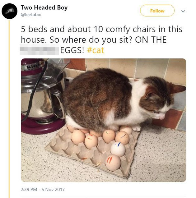 Cat sitting on a carton of eggs.