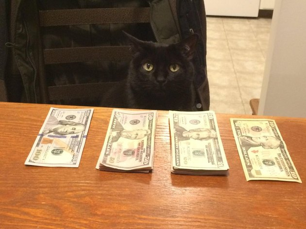 Cat in front of stacks of money.
