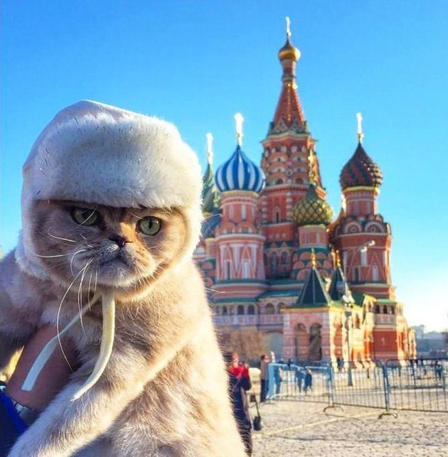 121 Russian names for male and female cats