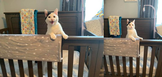 white cat in baby crib