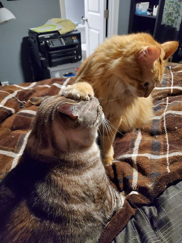 cat puts paw on second cat's head