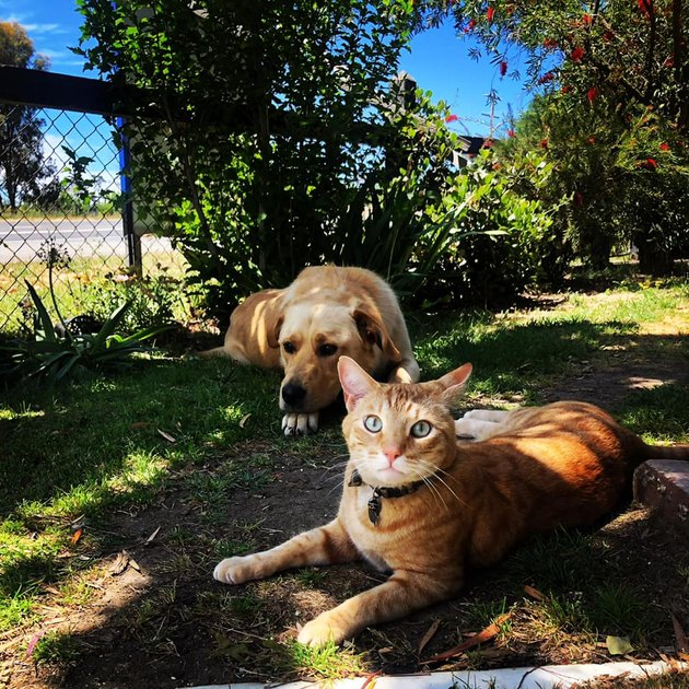 cat and dog chill in yard on sunny day