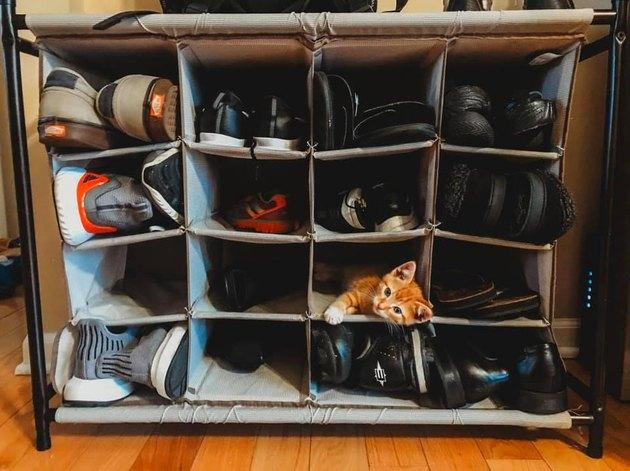 kitten naps in shoe cubby
