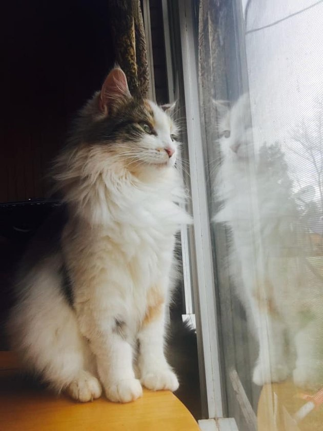 cat looks out window