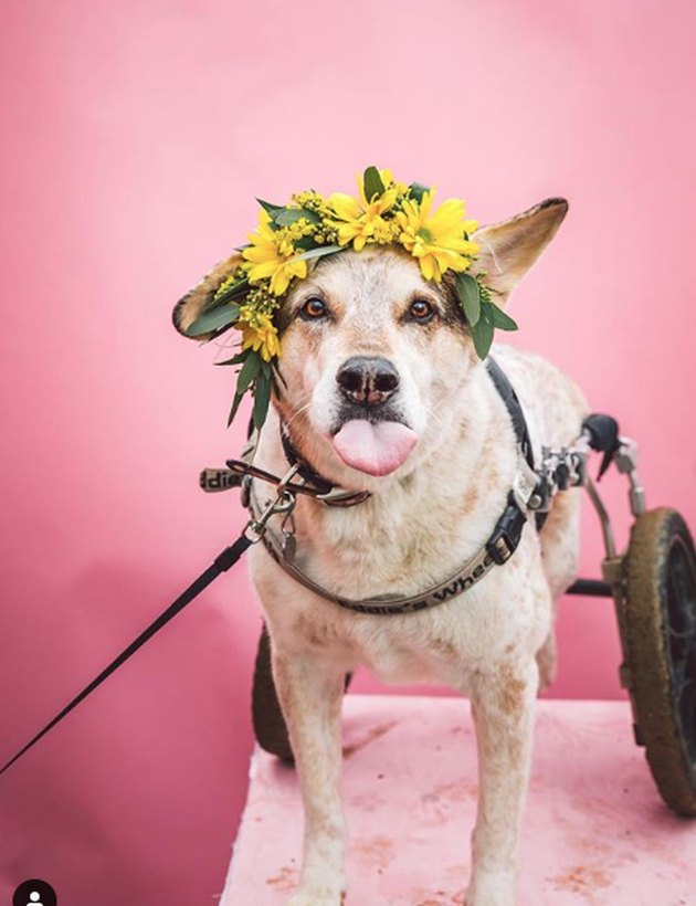 dog in yellow flower crown