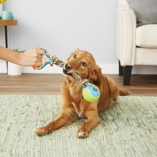 dog jaws at tennis ball rope toy
