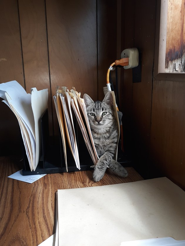 cat inside file