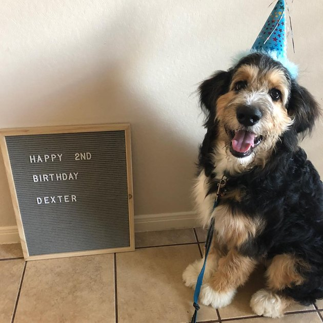 20 Dogs — And 1 Cat — Rocking Sweet As Heck Party Hats