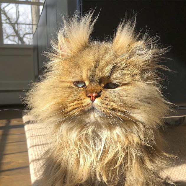 136 punny cat names