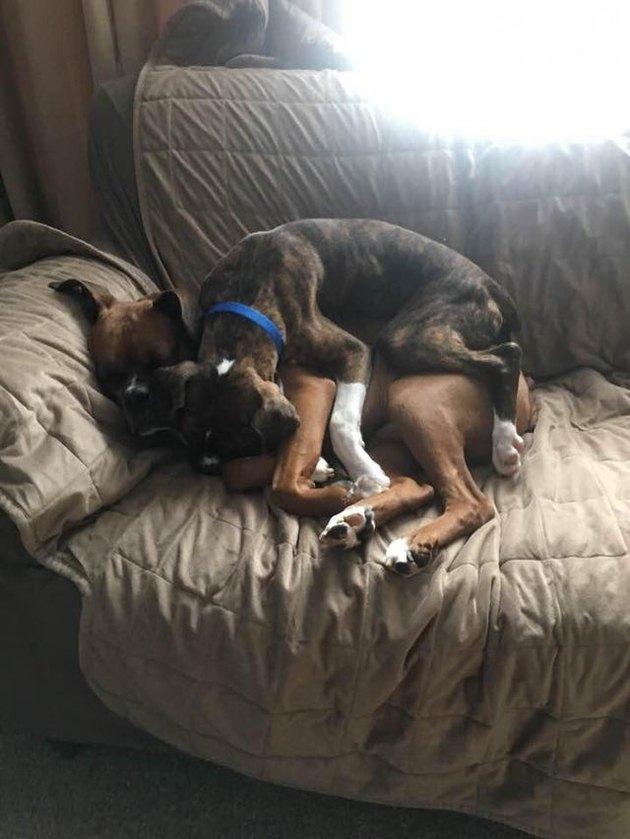 Dog lying on dog