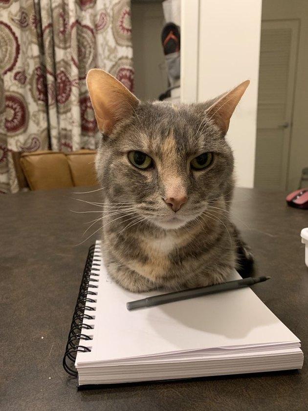cat sits on teacher's notepad