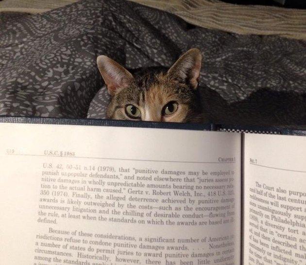 cat peers over book