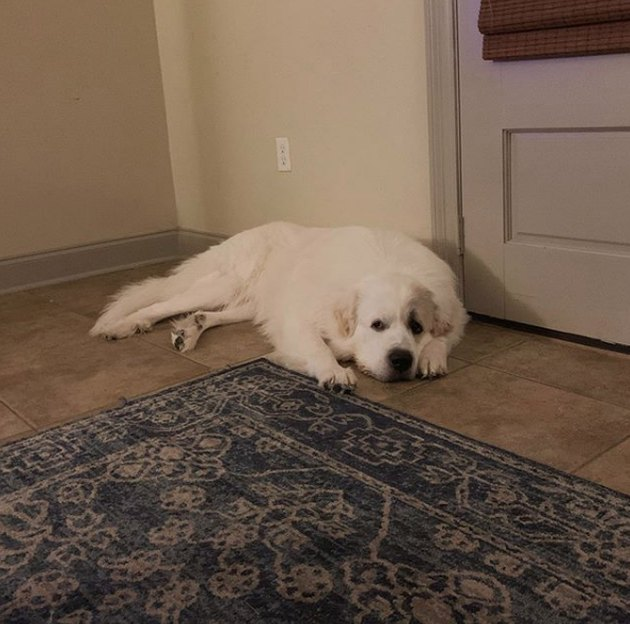 a dog lying by the door