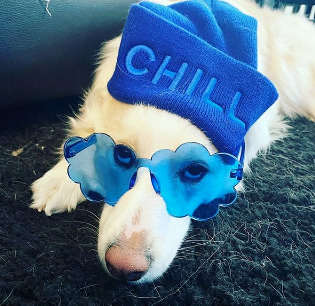 "a dog wearing blue sunglasses and a knit cap that says ""chill"""