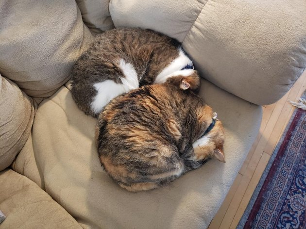 Two cats curled into balls.
