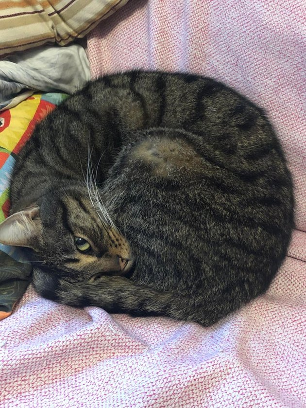 Cat curled into a ball