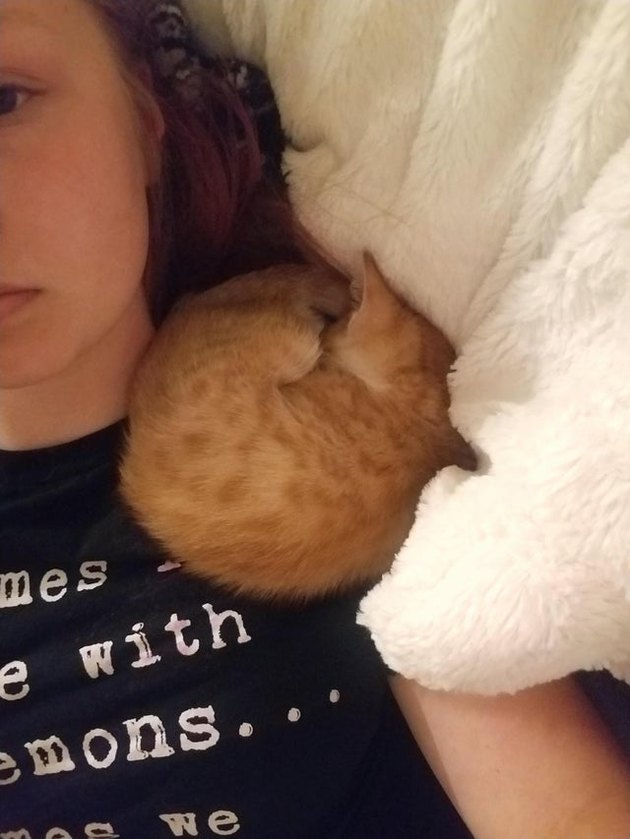 Kitten curled into a ball on someone's shoulder