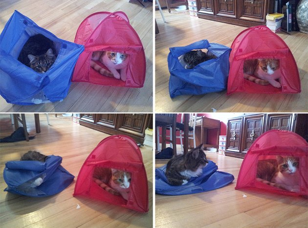 Cat sitting on top of a tent