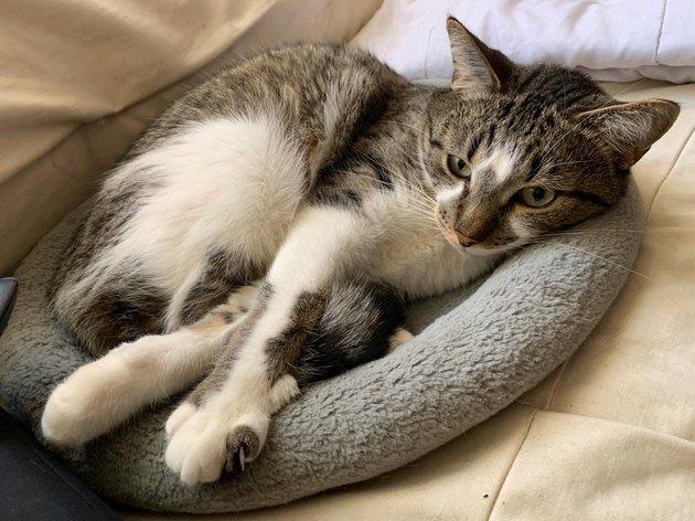 crossed legs cat
