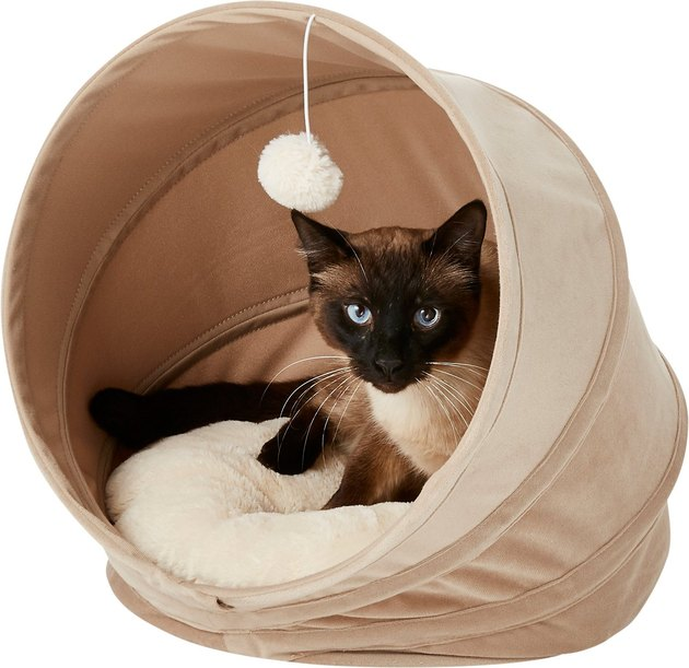 siamese cat sleeps in Frisco Canopy Cat Cave
