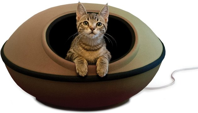 cat sleeps in heated cat pod