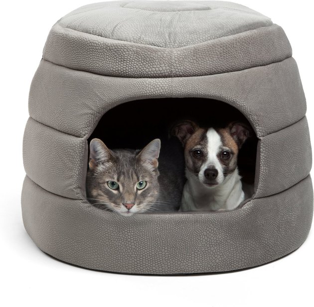 cat & dog snuggle in covered cat bed