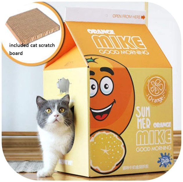 cat emerges from cat cave in shape of orange juice carton