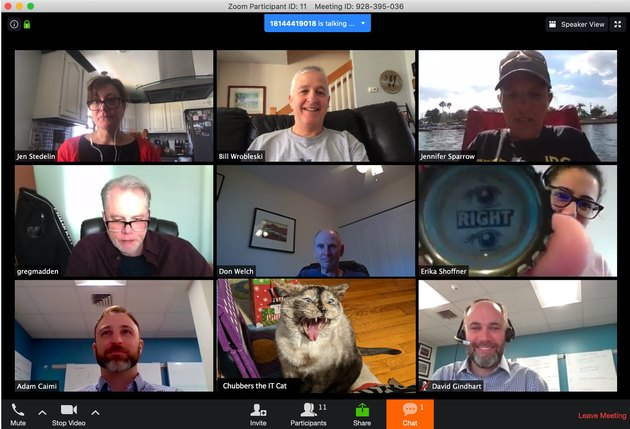cat on zoom chat with coworkers