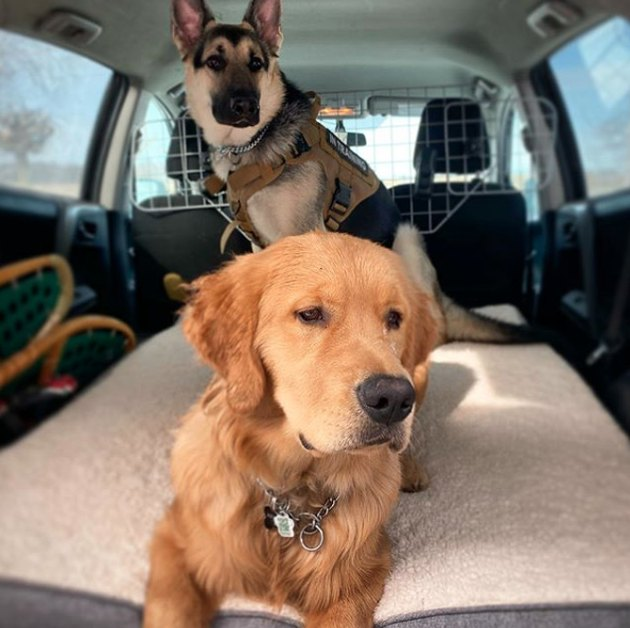 two dogs in the bed of a truck