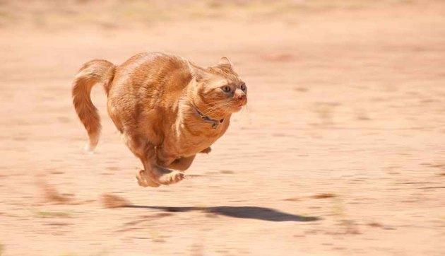 cat running fast