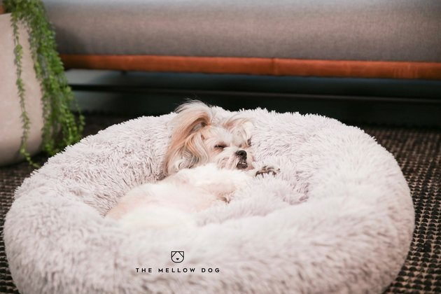small dog lying on fluffy bed