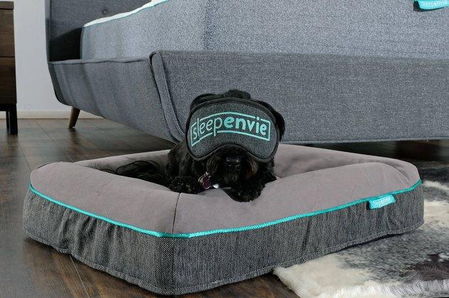 dog lying on bed with sleep mask on