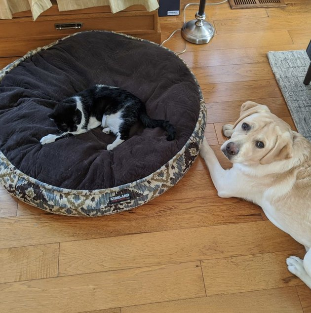Sad dog being ignored by cat who stole his bed