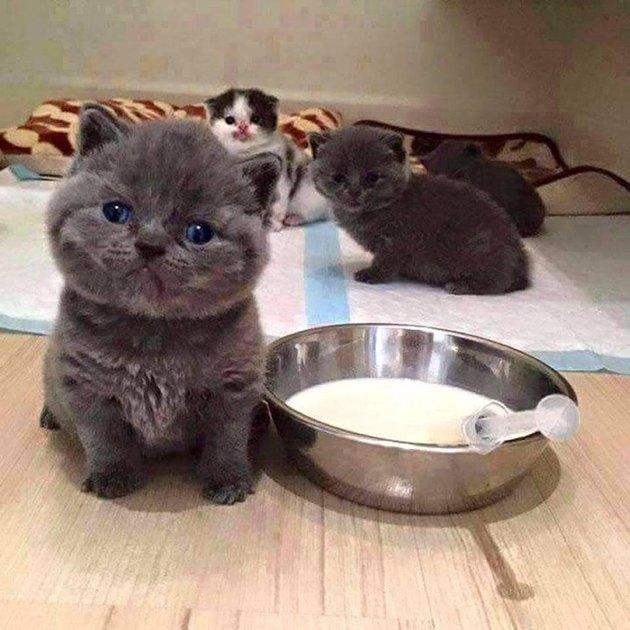 Tiny baby kittens