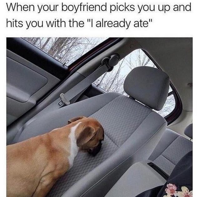 "Puppy sitting backwards in passenger seat. Caption: When your boyfriend picks you up and hits you with the ""I already ate"""