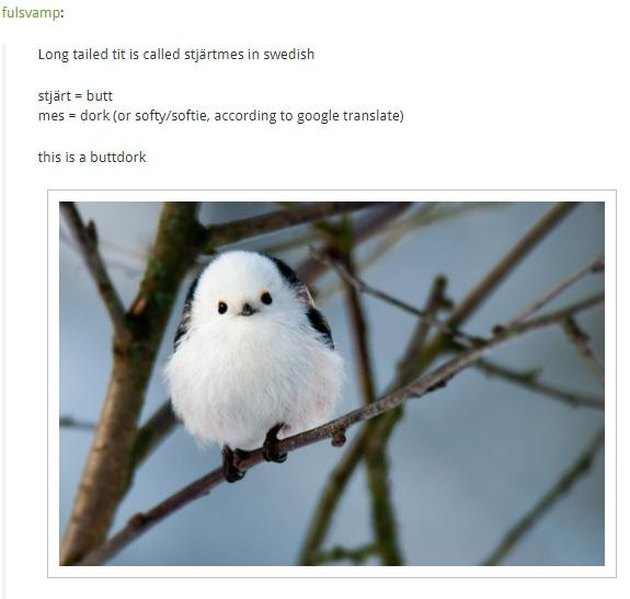 """Translation of the Swedish name for the long tailed tit is """"buttdork"""""""